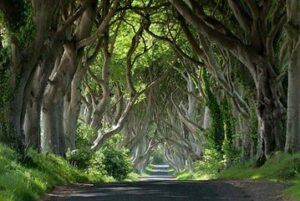 The Dark hEDGES bALLYMONEY Game of thrones kings road near the giants causeway